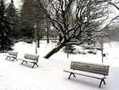 Winter benches — Stock Photo