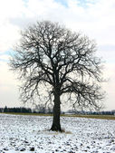 Tree in a winter field — Stock Photo