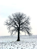 Tree in a winter field 1 — Stock Photo