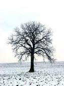 Tree in a winter field 1 — Stock Photo
