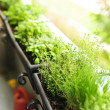 Balcony herb garden - Stock Photo