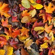 Fall leaves background — Foto Stock