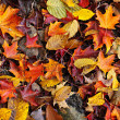 Fall leaves background — Stock Photo