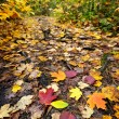 Stock Photo: Path in fall forest