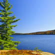 Постер, плакат: Pine tree at lake shore