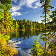 Stock Photo: Forest and sky reflecting in lake