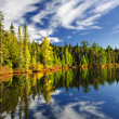 Stock Photo: Forest reflecting in lake