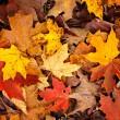 fundo de folhas de outono — Foto Stock #7612028