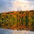 Fall forest and lake - Stock Photo