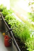 Balcony herb garden — Stock Photo