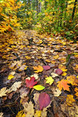 Path in fall forest — Stock Photo