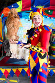 Harlequin holding poodle — Stock Photo