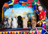 Smiling clown and 7 dogs — Stock Photo