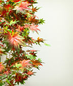 Artificial maple leaves | background — Stock Photo