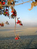 Podzimní ráno — Stock fotografie