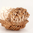 Shimeji mushrooms — Stock Photo