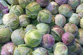 Cabbage — Foto Stock