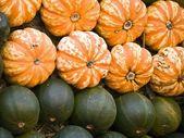 Pumpkins-orange-green — Stock Photo
