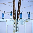 Stock Photo: Barbed wire-blue screen door