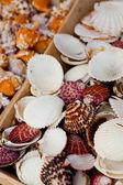 Seashells — Photo