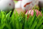 Grass background with Easter eggs — Stock Photo