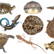 Wild animal collection reptile — Stock Photo #6917398
