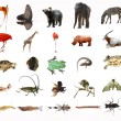 Wild animal collection isolated — Stock Photo #6917961