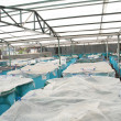 Winter aquaculture hothouse — Stock Photo
