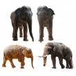 Elephant collection — Stock Photo