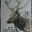 Stamp - elk Elaphodus davidianus — Stock Photo