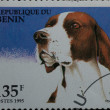 Stamp - Basset dog — Stock Photo