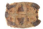 乌龟龟 — 图库照片