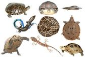 Wild animal collection reptile — Stock Photo