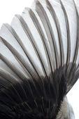 Plume d'aile oiseau — Photo
