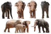 Elephant collection — Stock Photo