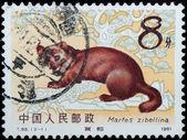 Stamp - wild animal sable — Stock Photo