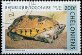 Republique Togolaise - Circa 1996: estampilla - reptil animal turtl — Foto de Stock