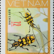 Stock Photo: VIETNAM - CIRCA 1980s: stamp - animal insect long horn beetle