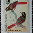 VIETNAM - CIRCA 1978: stamp - animal songbird — Stock Photo #6921029