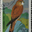 VIETNAM - CIRCA 1982: stamp - animal bird eagle — Stock Photo
