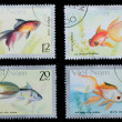 VIETNAM - CIRCA 1980: stamp animal goldfish — Stock Photo