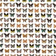 Lepidoptera butterfly — Stock Photo
