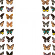 Butterfly frame background — Stock Photo