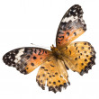 Butterfly isolated — Stock Photo #6926776