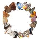 Butterfly blank frame background — Stock Photo #6928490