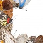 Butterfly blank frame background — Stock Photo