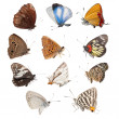 Butterfly set collection — Stock Photo