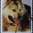 AUSTRALIA stamp shows Siberian husky dog - Stock Photo