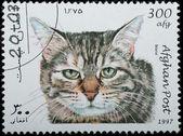 AFGHANISTAN - CIRCA 1997: animal pet cat — Stock Photo