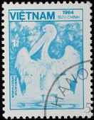 VIETNAM - CIRCA 1984: stamp - wild animal pelican bird — Foto Stock